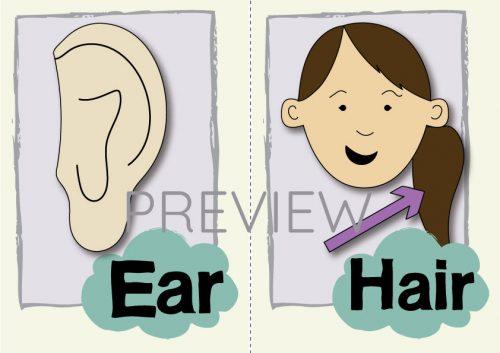 ESL English Ear Hair Flashcard