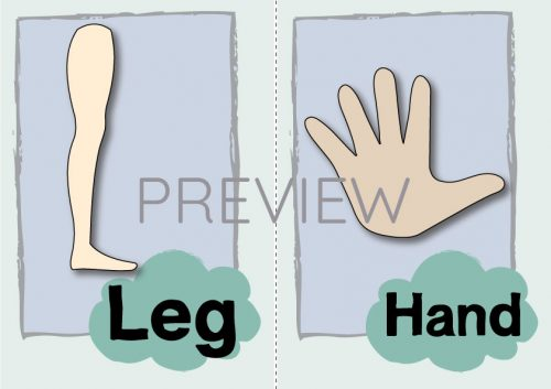 ESL English Leg Hand Flashcard